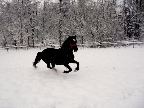 snow1 015